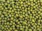 免税进口绿豆