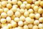 免税进口黄豆